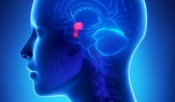 Stimulate Pituitary Gland