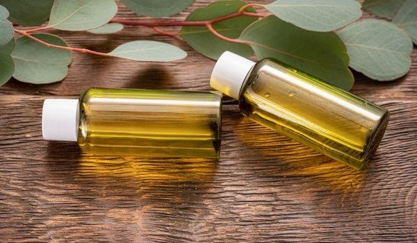 Eucalyptus Essential Oil For Cold