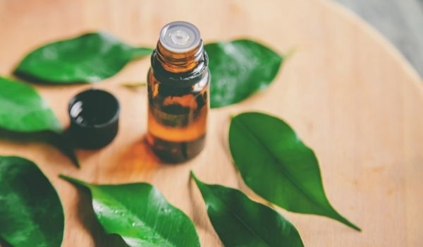 Tea Tree Essential Oil For Cold
